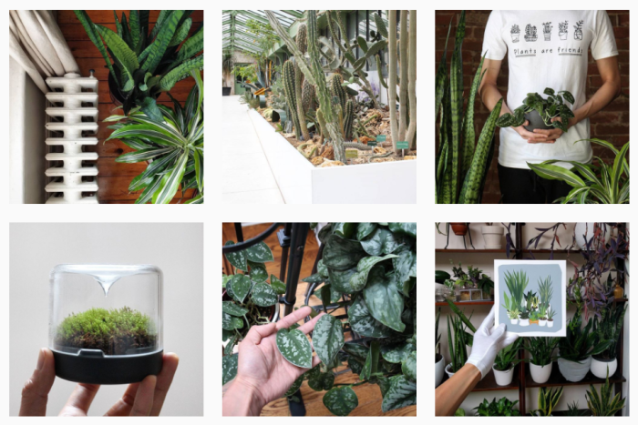 Houseplant Journal by Darryl Cheng