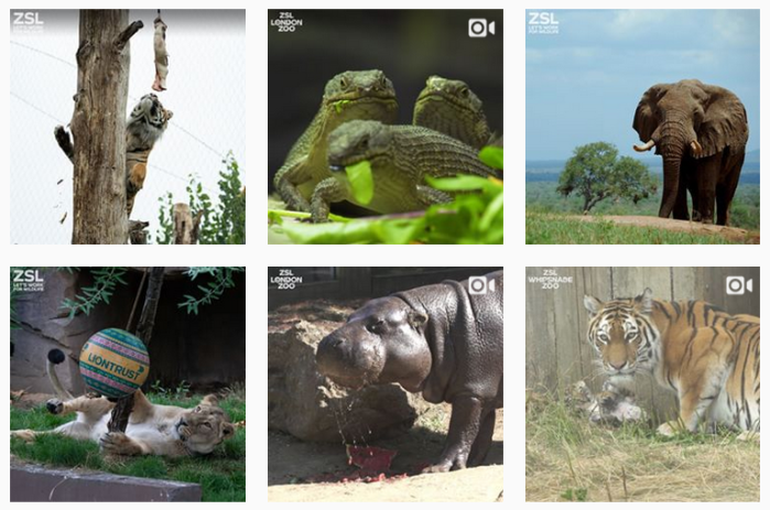 Six recent posts from @officialzsl on Instagram