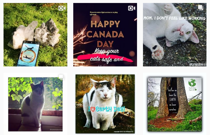 Six recent posts from @catwisdom101 on Instagram