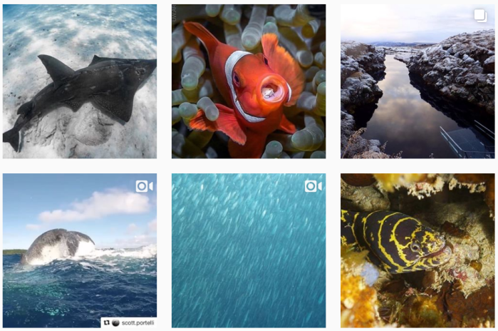 Diving Blogs We Love: 6 recent posts from @originaldiving on Instagram