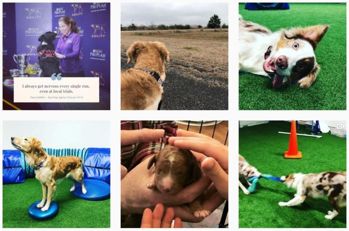 Dog Agility Blogs We Love: @baddogagility_ on Instagram