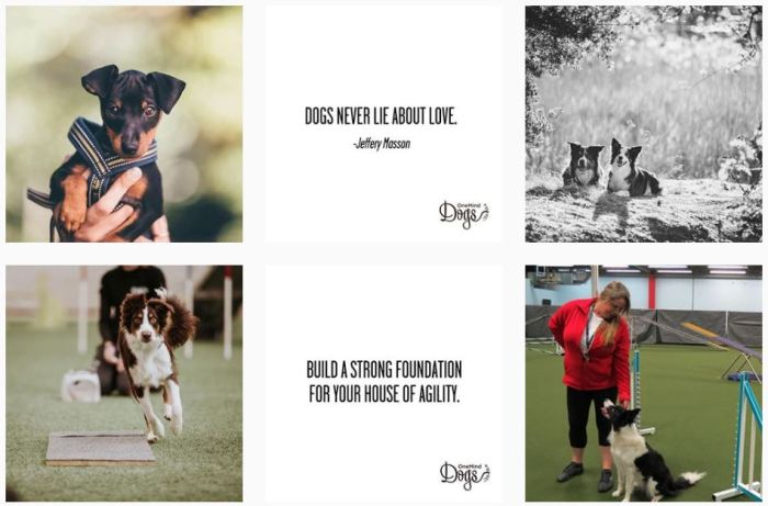 Dog Agility Blogs We Love: @oneminddogs on Instagram