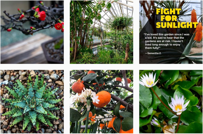 Botanic Garden Blogs We Love - @brooklynbotanic on Instagram