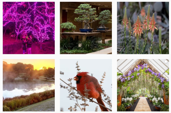 Botanic Garden Blogs We Love - @chicagobotanic on Instagram