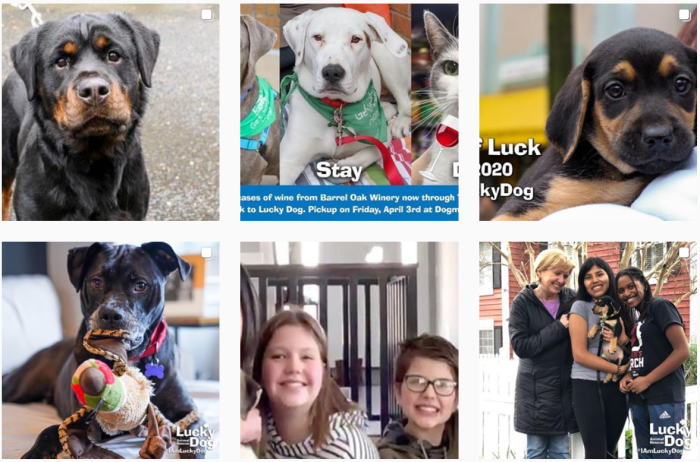 Dog Fostering Blogs We Love - @dcluckydog on Instagram
