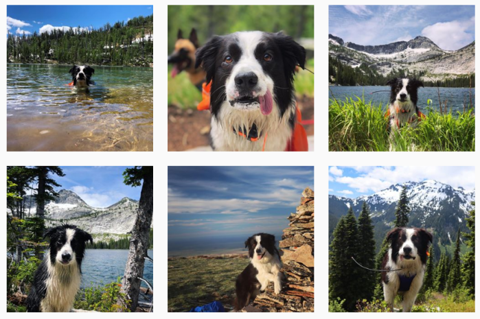 Dog Training Blogs We Love - @collie.without.borders on Instagram