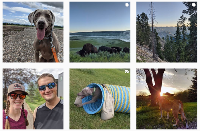 Dog Training Blogs We Love - @thatmuttcom on Instagram
